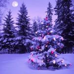 クリスマスツリーはどこがお得!?ニトリvsIKEAvs無印良品で対決!
