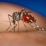 デング熱の新しい予防ワクチンがついに発表?感染を防ぐ方法とは?