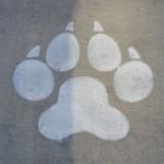 狂犬病は致死率99.99%!?地球上で最も恐ろしい病気